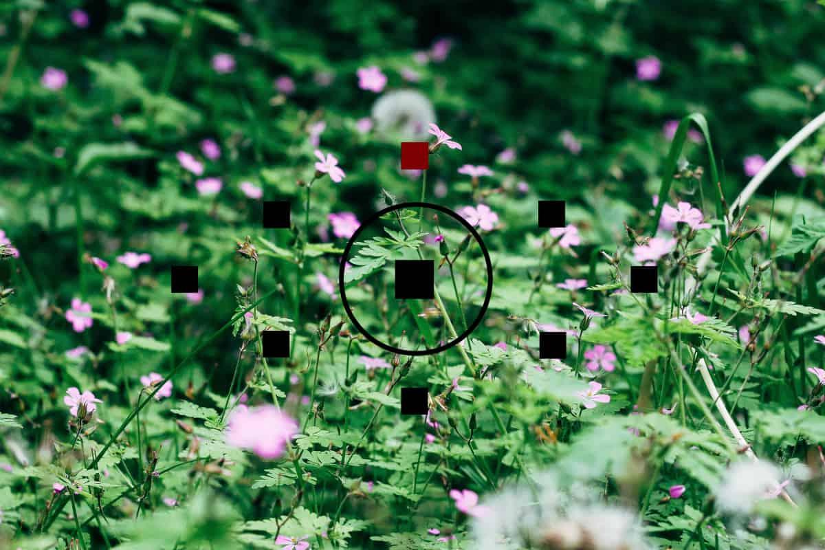 blomster-fotografering-fotokursus
