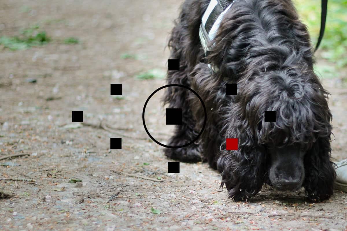 fotokursus-fotografer-hund